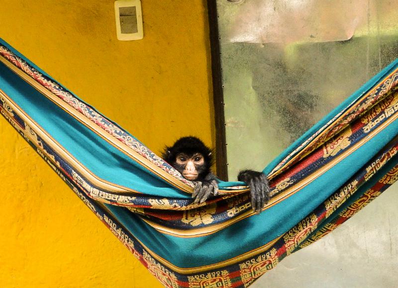 La Senda Verde Bolivia