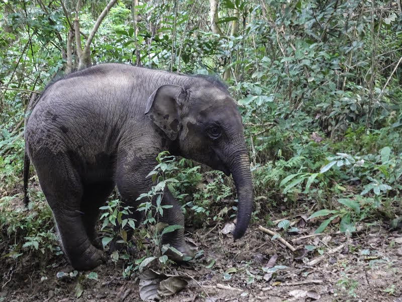 Best Places to See Elephants in Southeast Asia